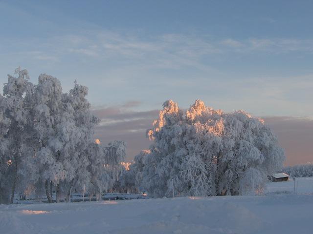 Lurviga vinterträd 1...