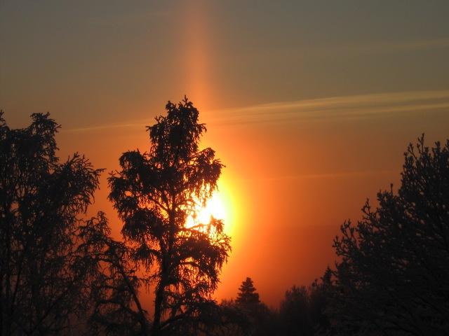 Vacker sol över skogskant 2...