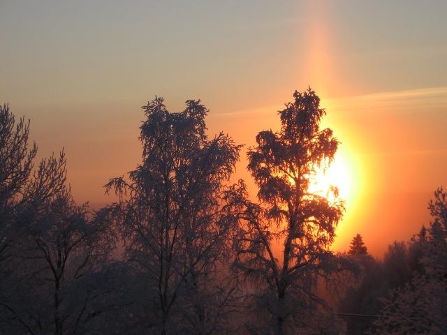 Vacker sol över skogskant 3...