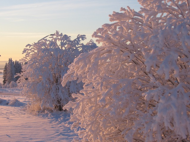 Vinterbuskar...