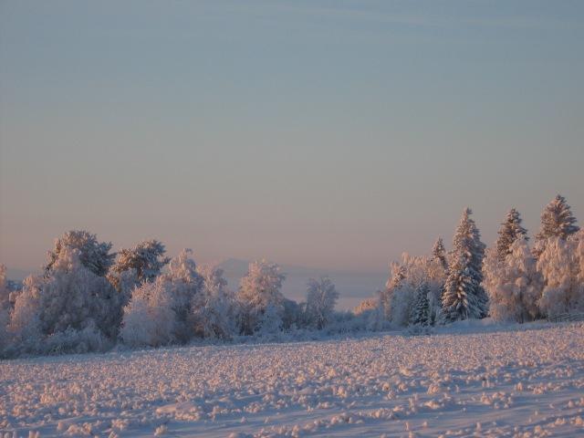 Vinteräng...