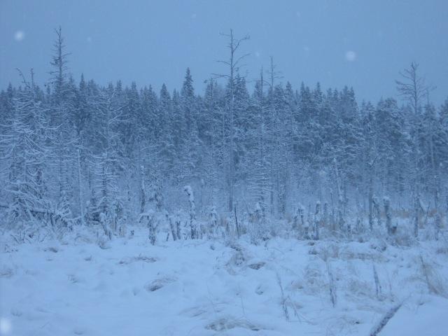 Vinterlandskap...