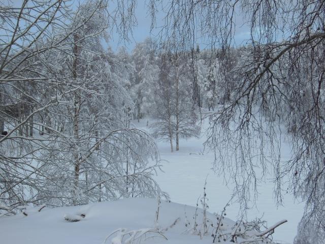 Vinterlandskap 36...