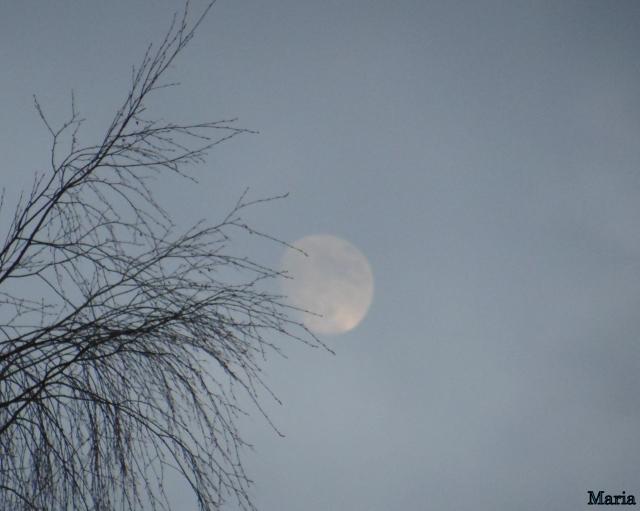 Månen o grenar 1, 1...