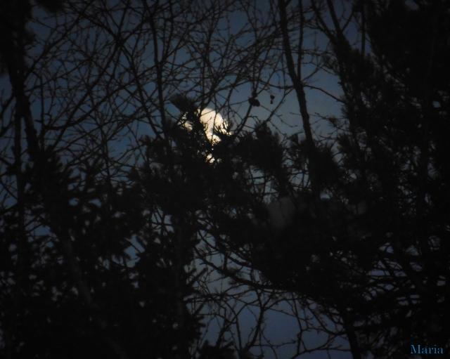 Månen o skog 1, 1...