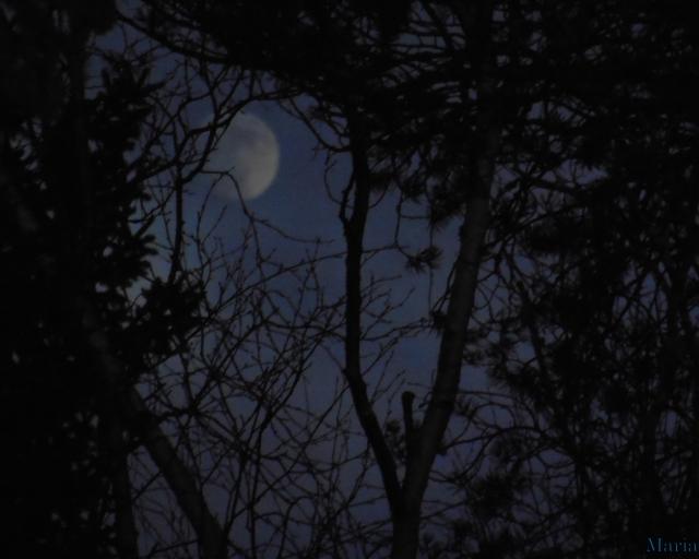 Månen o skog 2, 2...