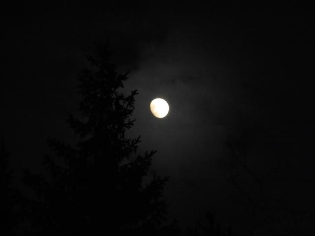 Månen o skog 9...