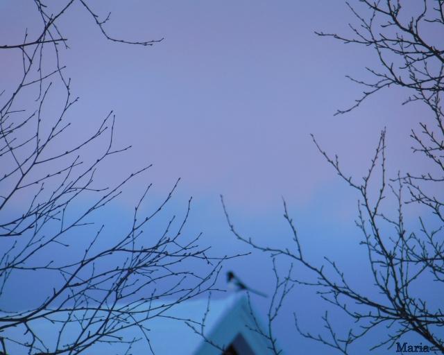 Träd o himmel 2. 2...