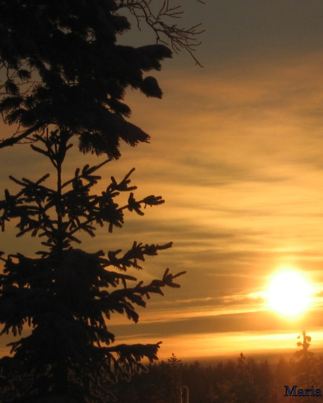 Träd o sol 13, 13...