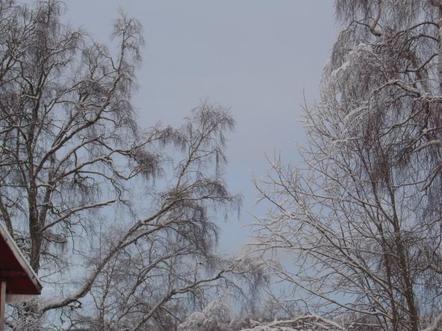 Vinterlandskap 38...
