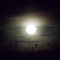 Fullmåne ....
