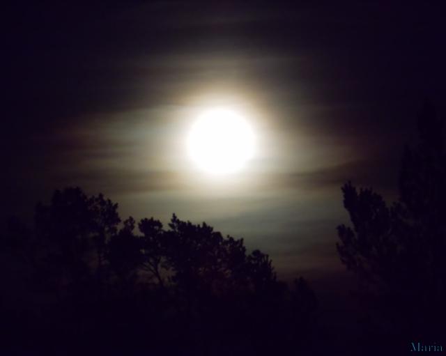 Fullmåne o träd 12, 12...