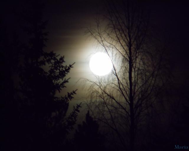 Fullmåne o träd 15, 15...