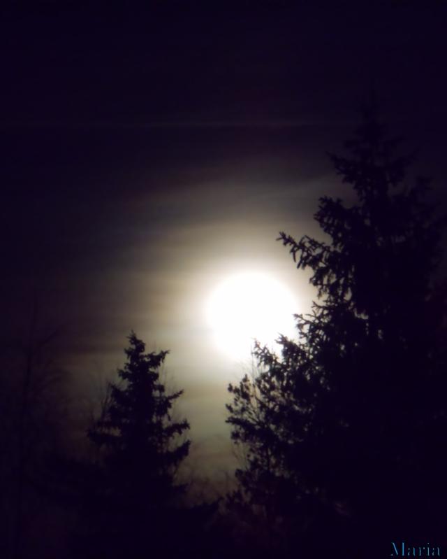 Fullmåne o träd 17, 17...