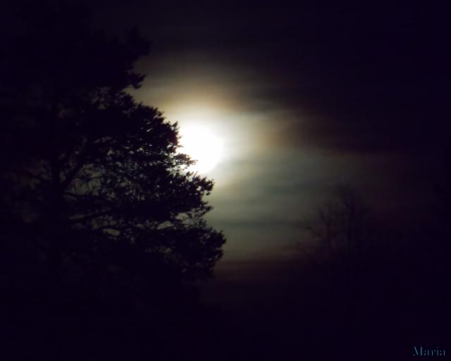 Fullmåne o träd 2, 2...