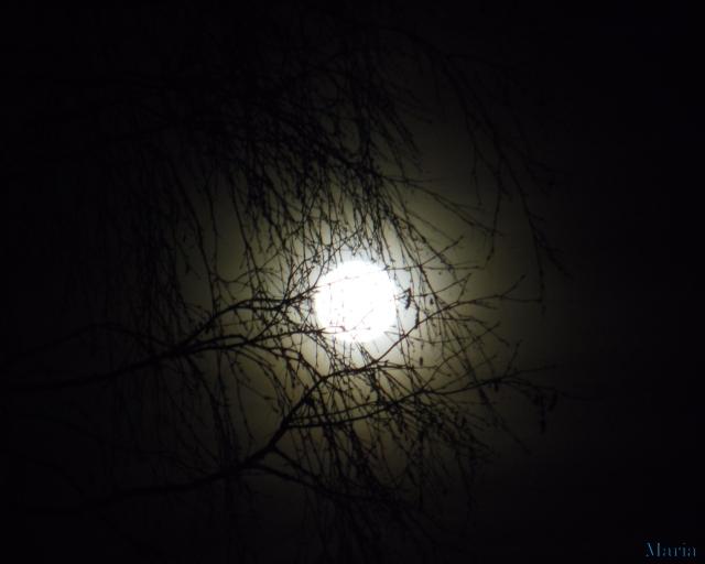 Fullmåne o träd 26, 26...