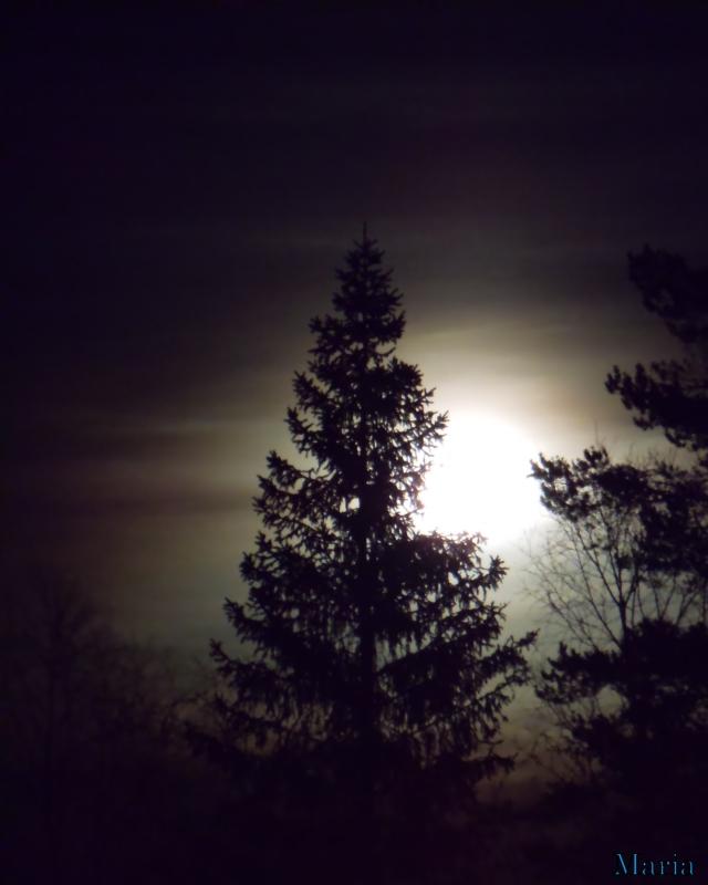 Fullmåne o träd 5, 5...