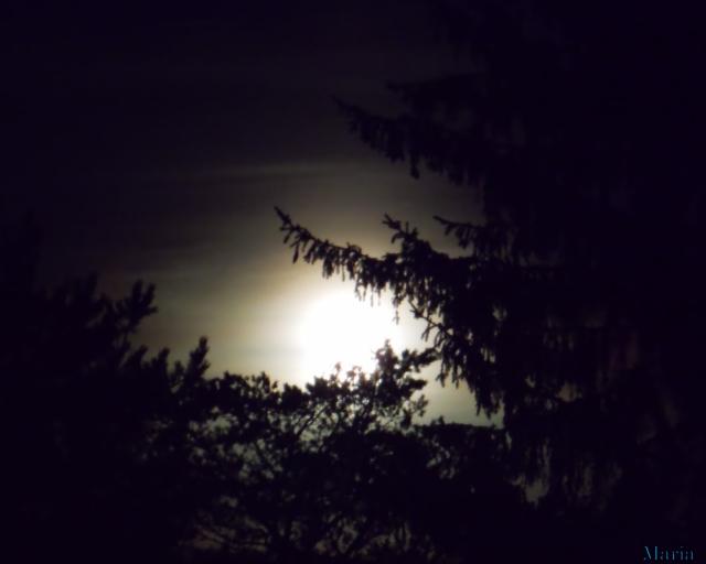 Fullmåne o träd 9, 9...