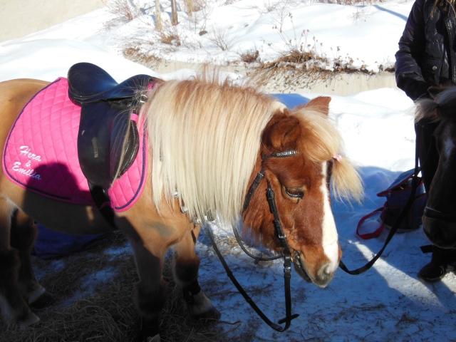 Ponnyridning 3...