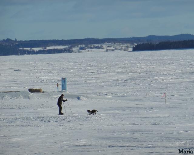 Skidåkare o hund 2. 2...
