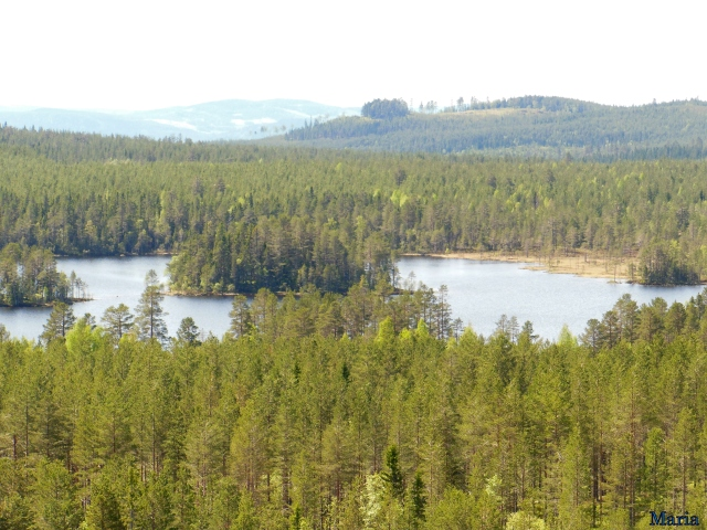 Orsa Björnpark, utsikt 3, 3...