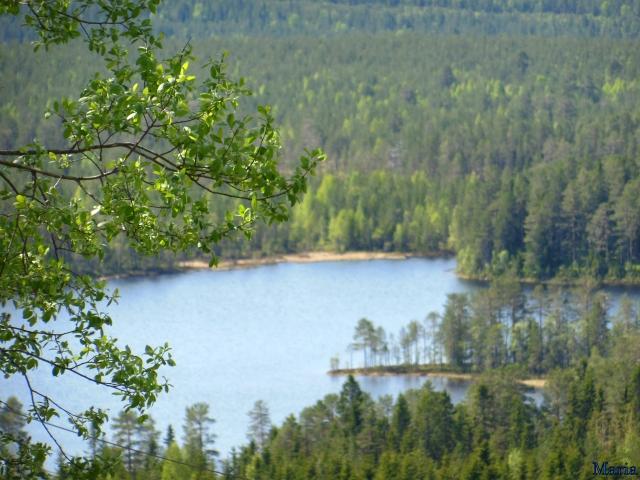 Orsa Björnpark, utsikt 7, 7...