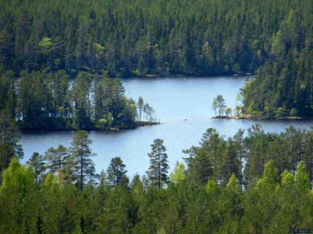 Orsa Björnparkm utsikt 8, 8...
