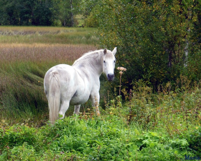 Häst 2, 2...