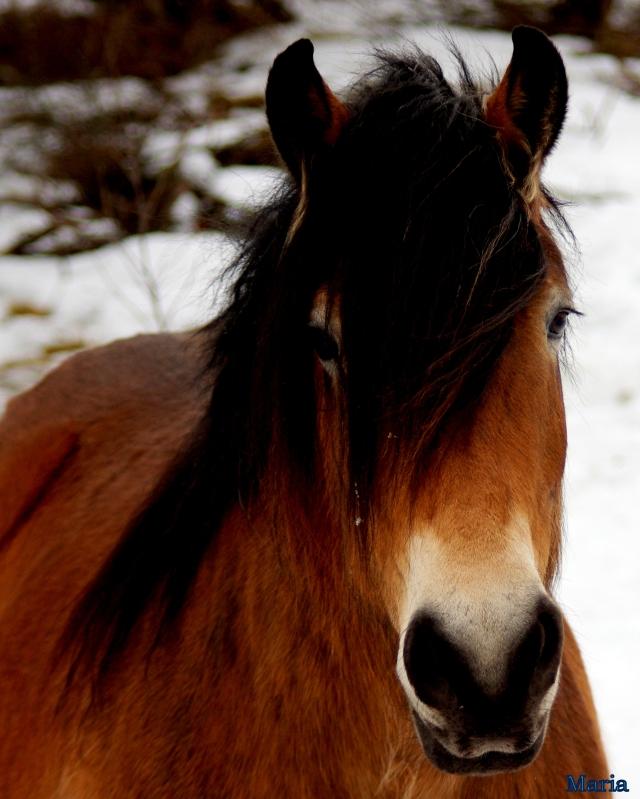 Häst 29,29...