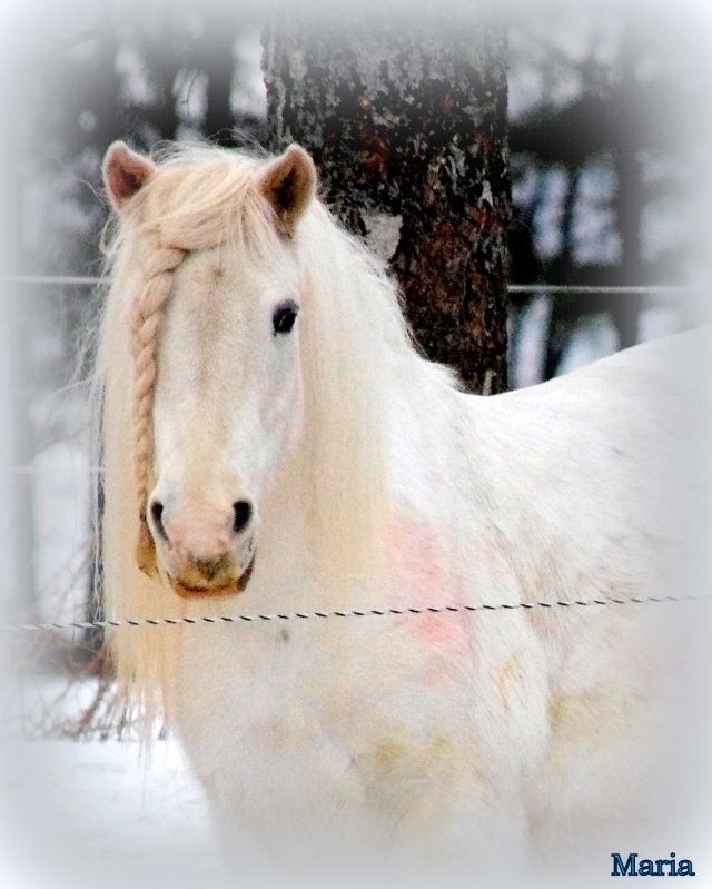 Häst 41,0...