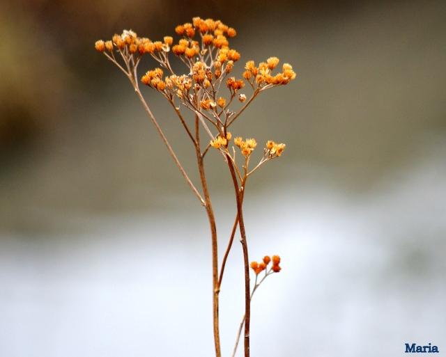 Växter 6,6...
