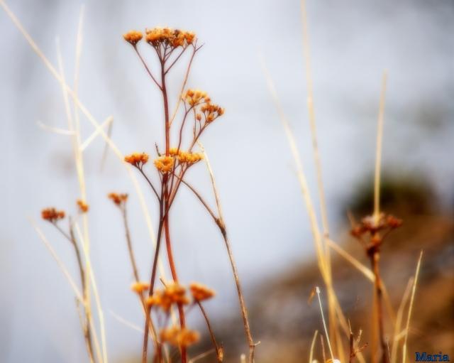 Växter 7,1...
